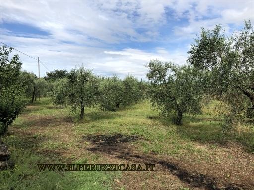 GENERICO terreno agricolo in  vendita a EUROPA - FIRENZE (FI)